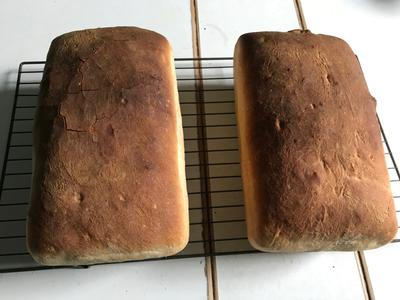 Two loaves of surprisingly-professional-looking homemade bread on a wire cooling rack